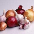 Sức khỏe - Những vị thuốc quý từ củ gia vị