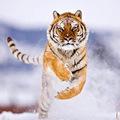 Eva Sành điệu - Mẹo chụp ảnh động vật hoang dã ấn tượng
