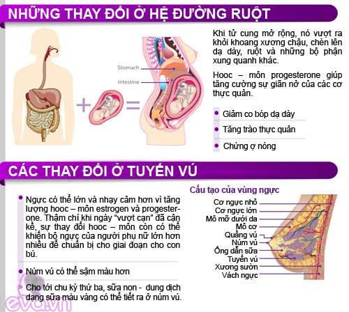 infographic: co the me bau thay doi the nao? - 4