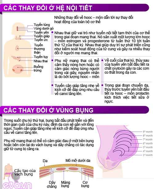 infographic: co the me bau thay doi the nao? - 5