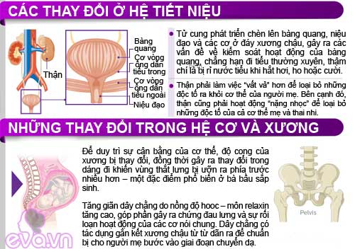 infographic: co the me bau thay doi the nao? - 6
