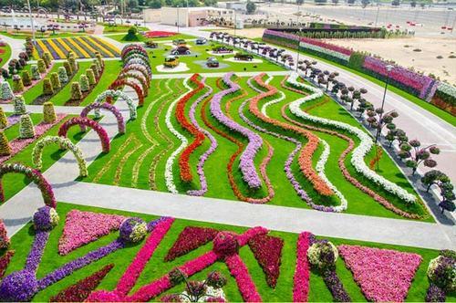 Thăm vườn hoa tự nhiên lớn nhất hành tinh - 11