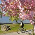 Đi đâu - Xem gì - Ngắm những mùa xuân đẹp nhất thế giới