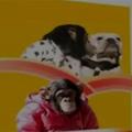 Clip Eva - Khỉ dắt chó hái quả: Xem xong cười 'ngất'