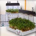 Nhà đẹp - Tự trồng vườn rau xinh hết cỡ trên bàn