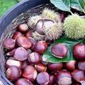 Bếp Eva - Làm sao để chọn được hạt dẻ ngon?