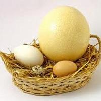Ăn trứng đà điểu, đẻ con thông minh