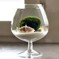 Nhà đẹp - Thu nhỏ đại dương bao la bỏ trong chiếc ly