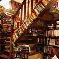 Đi đâu - Xem gì - Đến Paris thăm hiệu sách cổ đẹp nhất thế giới