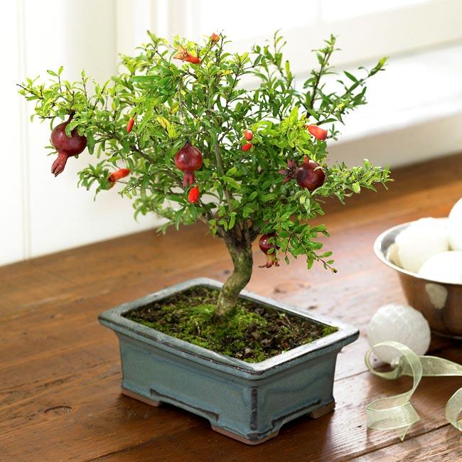 """1. Cây thạch lựu  Trong phong tục tập quán, cây thạch lựu được coi là """" thạc lựu bách tử"""", là tượng trưng của """"đa tử đa phúc"""" (nhiều con nhiều phúc). Trên thực tế, hoa và quả thạch lựu màu đỏ như lửa, quả lại có thể giải khát chống say, có giá trị thẩm mỹ và giá trị sử dụng, vì vậy nó đã trở thành cây được trồng trong vườn của nhiều nhà.  Trong phong thủy, các gia đình hay trồng cây thạch lựu ở trước nhà bởi họ tin rằng, cây thạch lựu luôn mang điều may mắn và tốt lành đến cho gia chủ.  Bài liên quan:  Top cây cảnh có độc chết người cần tránh  10 cây cảnh giúp tiền vào như nước  7 loài hoa tuyệt đẹp tô điểm ban công  9 loại cây cảnh hút khí độc cực tốt"""