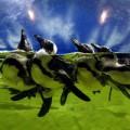 Tin tức - Ảnh đẹp: Hải cẩu làm dáng e thẹn trước máy ảnh