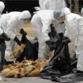 Tin tức - Báo động dịch cúm nguy hiểm tràn vào VN