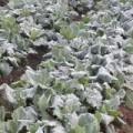 Tin tức - Sương muối phủ trắng núi đồi Lào Cai