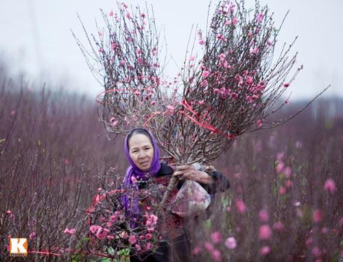 tet nguyen dan 2014: mien bac khong qua ret - 1