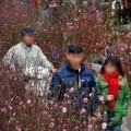 Tin tức - Tết Nguyên Đán 2014: Miền Bắc không quá rét