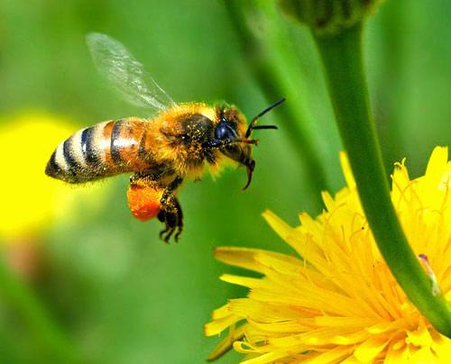 phan ong co nhieu cong dung - 1