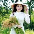 Làng sao - Á hậu Tú Anh duyên dáng giữa đồng lúa vàng