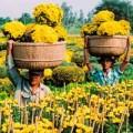 Nhà đẹp - Hoa Tết miền Tây rực rỡ khoe sắc