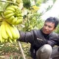 """Mua sắm - Giá cả - Thị trường Tết: Cây """"độc"""", trái lạ đắt hàng"""