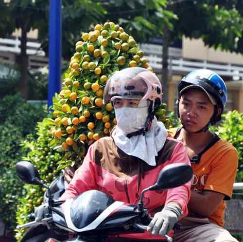 my tho: ruc ro duong hoa hung vuong - 10