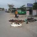 Mua sắm - Giá cả - Cúm gia cầm bùng phát, chợ gà vẫn bán thoải mái