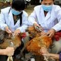 Tin tức - Cảnh báo vi rút cúm gây tử vong ở người vào VN