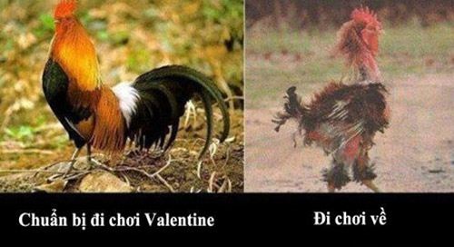 cuoi nghieng nga anh hai huoc ve valentine - 3