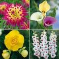 Nhà đẹp - 8 loài hoa đẹp tuyệt trồng vào mùa xuân