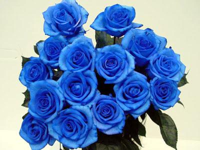 "cong nghe tao ""hoa hong xanh"" tien trieu - 1"
