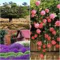 Làm đẹp - Nguyên liệu thiên nhiên dùng làm đẹp nhiều nhất