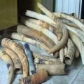Tin tức - Chuyển phát nhanh lô ngà voi 2 tỷ đồng