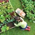 Nhà đẹp - Mùa xuân, dân phố trồng rau gì?