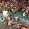 Mua sắm - Giá cả - Gà đầu trọc chết, ốm đầy chợ gia cầm Hà Vỹ