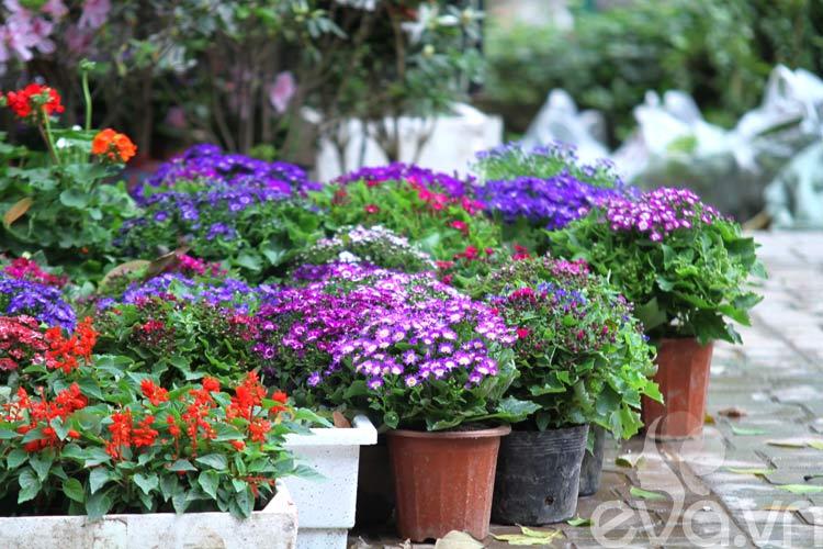 Năm nay, mùa xuân Hà Nội và các tỉnh phía Bắc vẫn phải chịu những đợt rét đậm và mưa phùn. Tuy nhiên, không quá khó khăn để bạn có thể tìm mua những loài hoa đẹp về trồng trang trí tại nhà. Dạo một vòng quanh các chợ hoa nổi tiếng ở Hà Nội như chợ hoa Hoàng Hoa Thám, Quảng Bá... sắc hoa xuân đang rực rỡ khoe sắc  Sau đây là 10 hoa cảnh đẹp dễ trồng vào mùa xuân, đang được nhiều người tìm kiếm nhất tại Hà Nội:  Bài liên quan:  Trồng hoa chuông xanh chào xuân rực rỡ  Top cây cảnh đẹp giúp sự nghiệp thăng tiến  Tết này giàu sang, may mắn nhờ hoa đẹp  3 loài hoa đẹp đuổi muỗi 'cực đỉnh'
