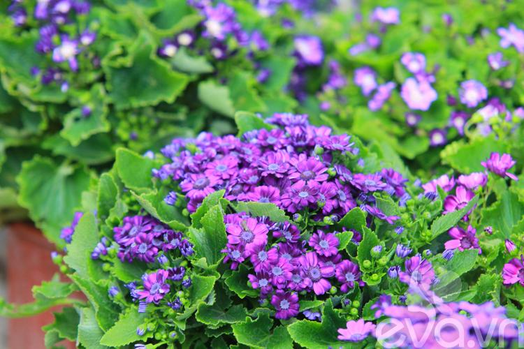 Người Hà Nội chuộng trồng hoa gì mùa xuân?