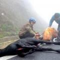 Tin tức - Lào Cai rét hại, thịt trâu bò bán khắp nơi
