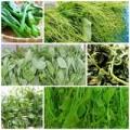 Bếp Eva - Ngọt lành rau đặc sản miền núi phía Bắc