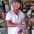 Tin tức - Câu được cá lăng đuôi đỏ quý hiếm