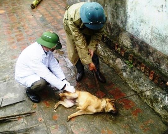 Thanh hóa: Thêm 1 người tử vong vì chó dại cắn-1