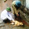 Tin tức - Thanh hóa: Thêm 1 người tử vong vì chó dại cắn
