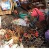 Lo ngại gà bệnh từ Trung Quốc tuồn sang Việt Nam