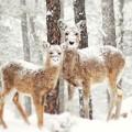 Xem & Đọc - Ngắm động vật vui đùa trong tuyết trắng