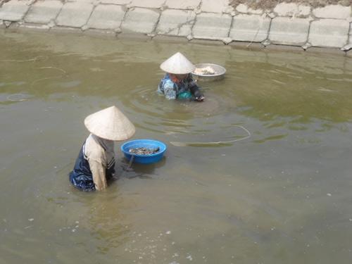 co cuc nhung phan doi cao hen muu sinh - 2