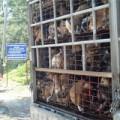 Tin tức - 'Văn hóa thịt chó' khiến dịch dại bùng phát