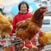Hong Kong công bố ca nhiễm cúm H7N9 thứ 6