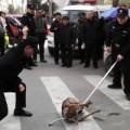 Tin tức - Phẫn nộ cảnh sát đánh chết chó cưng trên đường