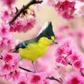 Xem & Đọc - Trăm hoa đua nở, đàn chim rạo rực đón xuân