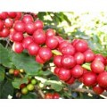 Mua sắm - Giá cả - Sản lượng cà phê có thể giảm 20%