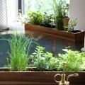 Nhà đẹp - Trồng rau thơm ngay trên bàn làm việc