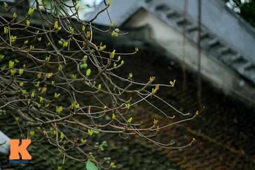 Hà Nội đẹp lạ mùa thay lá-10
